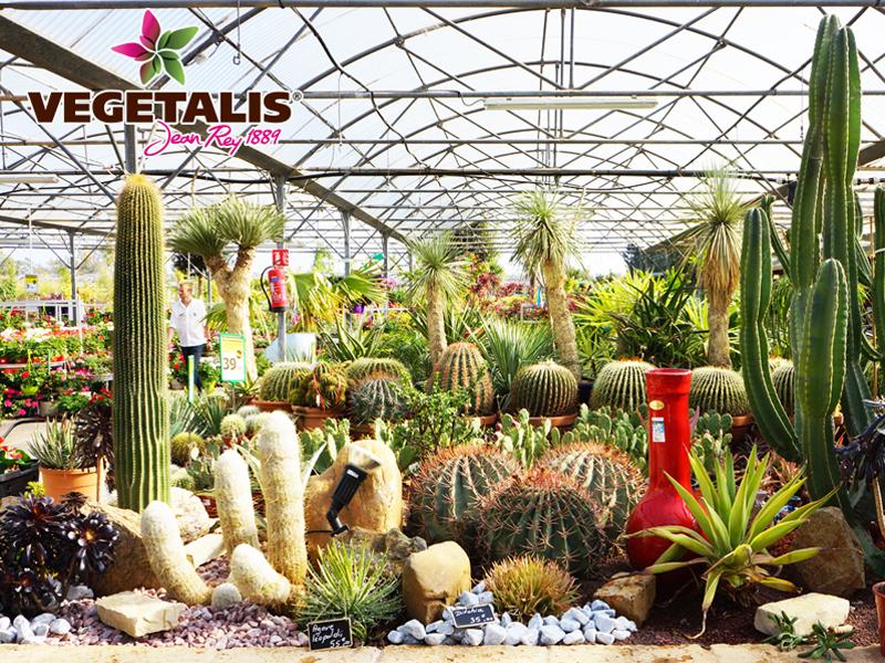 Marché aux fleurs :  plantes à massif et vivaces, plantes en suspension, plants de légumes, aromatiques, plantes fleuries…