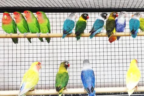 Boutique oiseaux exotiques