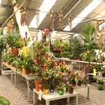 Participant du concours Notre Jardinerie en photo - Alexandre Montagné