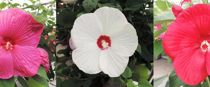 Couleur fleurs_Bandeau
