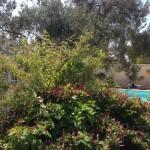 Participant du concours Les plus beaux jardins d'été - Eliane