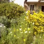 Participant du concours Les plus beaux jardins d'été - poirson