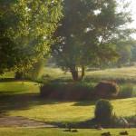 Participant du concours Les plus beaux jardins d'été - Baptiste CAVALLI
