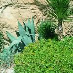 Participant du concours Les plus beaux jardins d'été - Laura
