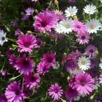 Participant du concours Les plus beaux jardins d'été - Lucie