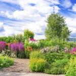 Participant du concours Les plus beaux jardins d'été - Le plus beau jardin d'été