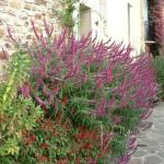 Participant du concours Les plus beaux jardins d'été - Charles