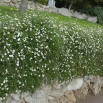 Participant du concours Les plus beaux jardins d'été - Julie