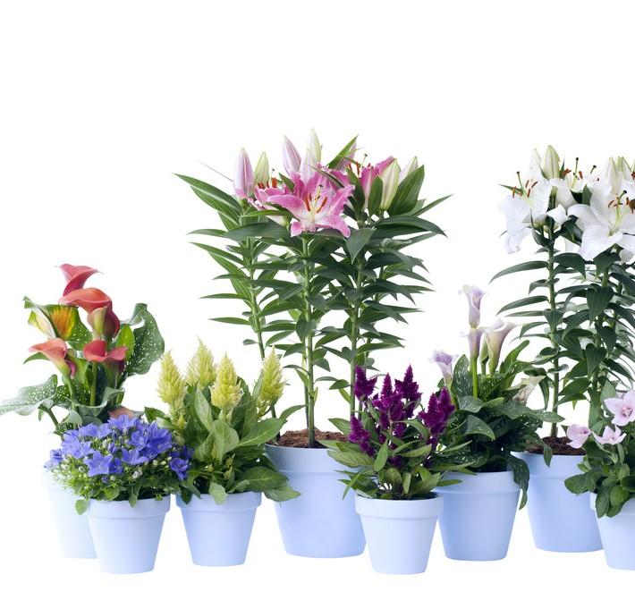 les plantes vice versa vegetalis