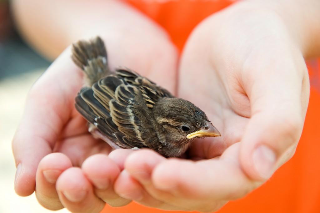 oiseau VEGETALIS