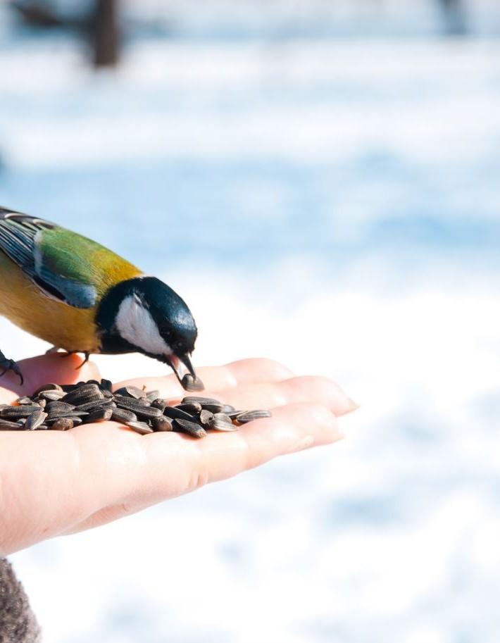les oiseaux du jardin VEGETALIS