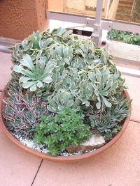 Composition de succulentes sur un balcon.